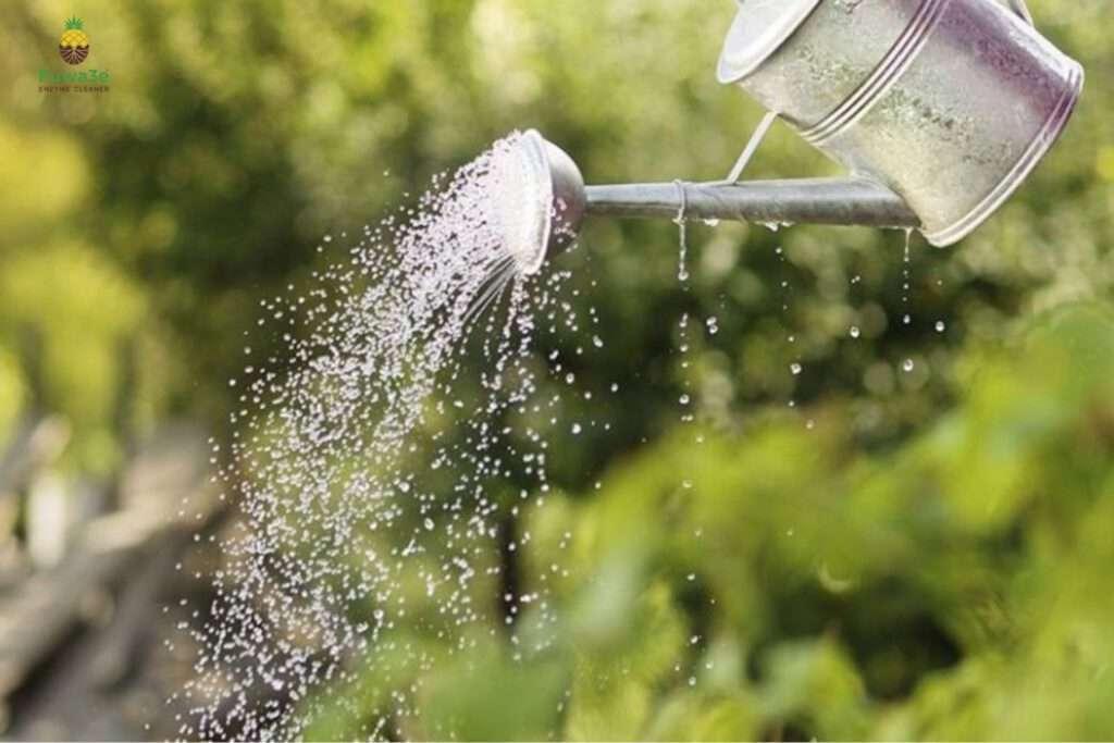 nước rửa chén hữu cơ